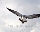 Beach Photography Incoming Flying Seagull 8x12 Cloudy Beach Sky Beach Decor