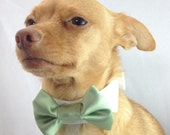 Pet  Bow Tie on a White Shirt Collar in Sage Green Satin