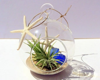 Air Plant Hanging Glass Orb Garden Beach Theme with sea glass sand and starfish