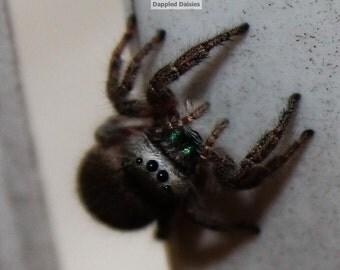 Photograph of a spider fine art print