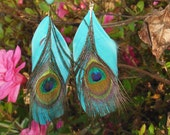 Turquoise and peacock feather earrings