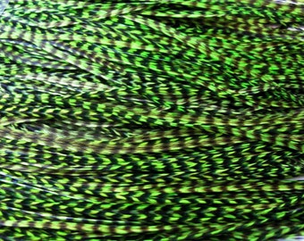 12 Grizzly Long Rooster Saddle Hackles - Fl. Green ( 8 - 10 inches) Hair Extension Feathers