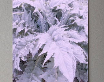 Nature Photography, Large Leaves Art, Plant Photography, Lilac Color, Mid Century Photography Natural Art, Natural Decor, Dreamy Photography