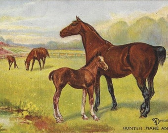 Hunter Mare and Foal - Antique 1900s Artist-signed Tuck's Oilette Horse Postcard
