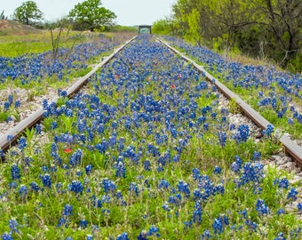 Wildflowers, Landscape photography, Texas, Hill Country, railroad,Western, flowers, bluebonnets, fine art print