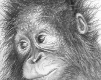 ACEO Baby Orangutan Art Drawing, Limited Edition Print by Marie Brown.
