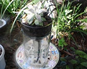Recycled Clear Glass Wine Bottle Planter with Herbs/Succulents/Plants/Seeds