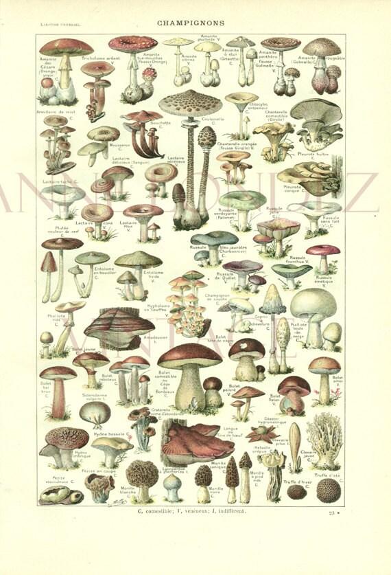 1922 Antique French Mushroom Print Vintage Mushroom Poster