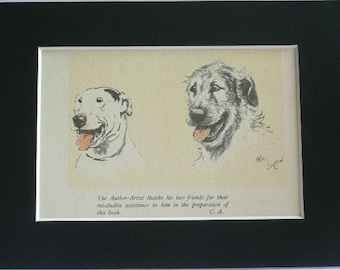 Bull terrier Irish Wolfhound Signed mounted vintage 1928 Cecil Aldin dog plate print Unique gift Christmas, Birthday, Thanksgiving present