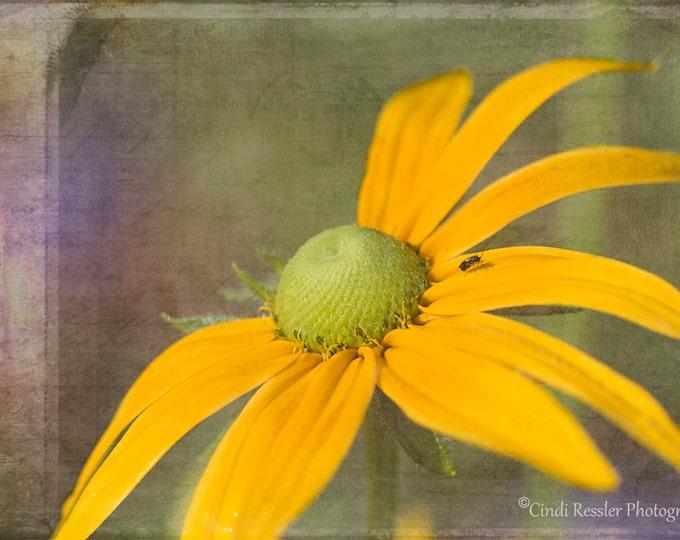 Irish Spring, Fine Art Photography, Flower Photography, Floral Photography, Nature Photography, Garden Photography