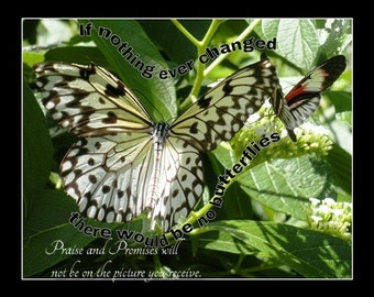 If nothing ever changed butterfly inspirational picture - select size - free shipping