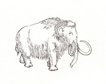 "Woolly Mammoth art print of an original drawing available 5x7"" or 8x10"""