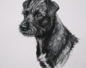 Patterdale Terrier dog fine art Limited Edition print from an original charcoal drawing