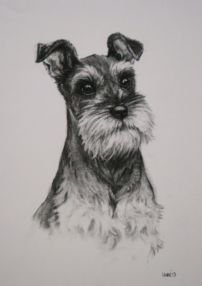 Miniature schnauzer terrier dog fine art limited by terrierzs