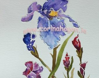 Original Irish Watercolour / Acrylic Painting by Artist CORINA HOGAN - Budding Iris OOAK