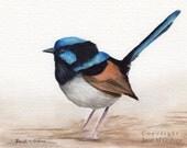 Superb Fairy Wren / Australian Bird / SFA - An original hand painted bird  watercolour painting by Australian Artist Janet Graham