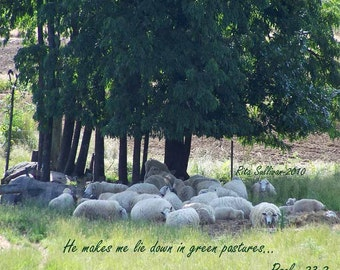 Sheep In Shaded Pasture, Instant Download 20 X 16