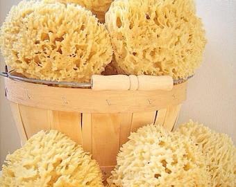 """Sea Wool Sponge 5""""-6"""" Cut"""