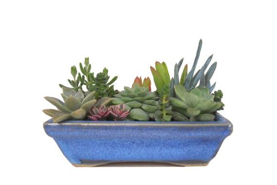Succulent dish garden in a blue ceramic planter rectangular - Rectangular succulent planter ...