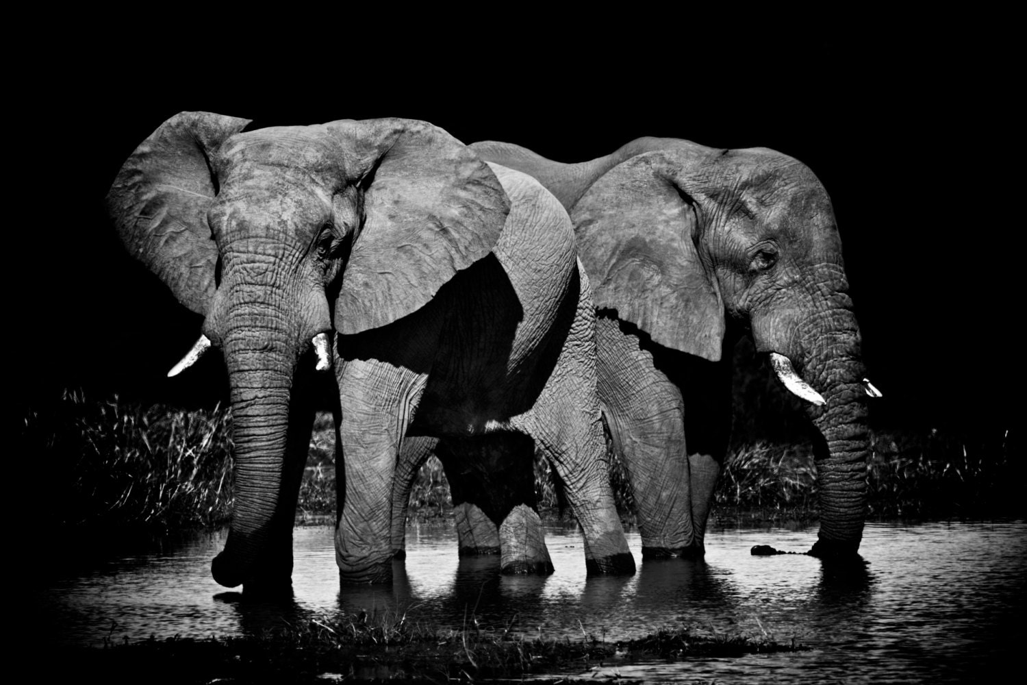 Elephants wildlife photography elephant decor african elephant African elephant home decor