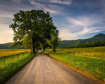 Tree and fence along a dirt road at Cade's Cove, Great Smoky Mountains National Park, - Photography Fine Art Print or Wrapped Canvas