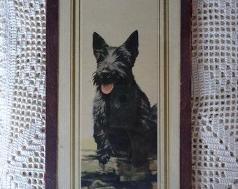 Vintage Scottie Dog Print by Adelaide Hiebel