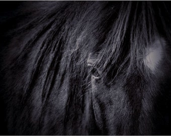 Horse Art • Black and White Horse Photography Print or Canvas • 8x10, 16x20, or 20x30 Large Wall Art