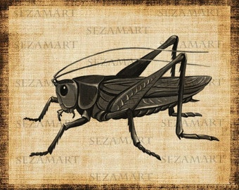 INSTANT DOWNLOAD - Grasshopper - Digital Collage Sheet, Scrapbooking, Burlap Fabric Transfer to Tea Towels, Download and Print