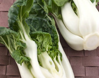 White BOK CHOY 1500 seeds 400 seeds pak Choi Chinese Cabbage vegetable