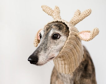 """Shop """"greyhound gifts"""" in Photography"""