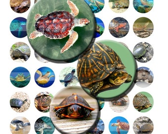 Turtle Sea Ocean Wild Animal Reptile Digital Images Collage Sheet 1 inch Circles INSTANT Download BC