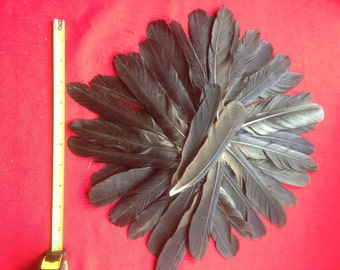 40+ English Carrion Crow Wing and Tail Feathers