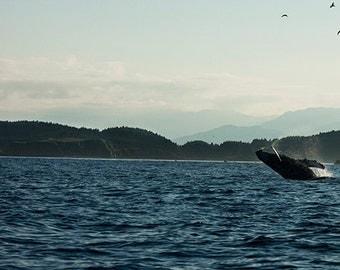 Photo of Breaching Whale, Scenic Photo, Nature Photo, Mountain Photo, Humpback Whale Art ,Nautical Wall Decor, Wildlife Photo, 4x6-24x36