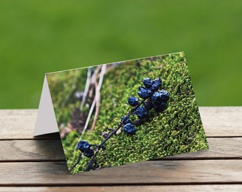 Nature Photo Card Wild Berries-5x7 Blank Card