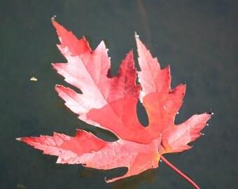 Floating Fall Leaf Photo Print
