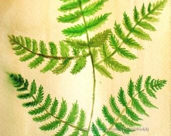 "Vegetable fern--ORIGINAL Watercolor painting 10 1/8""x7 1/2"""