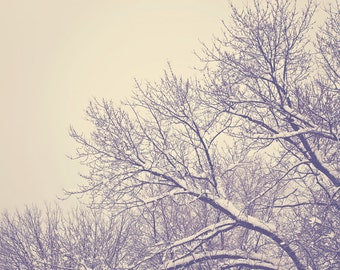 Snow Color Photo Print { brown, branches, winter, tree, sky, gloomy, hazy, bare, white, wall art, macro, nature & fine art photography }