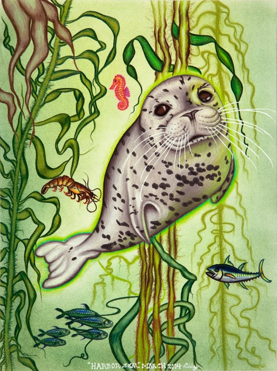 "Harbor Seal - 9x12"" Museum Quality Matted Print Limited Edition Of 350"