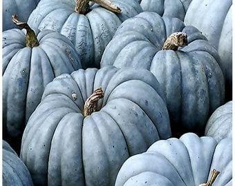 Jarrahdale Blue Pumpkin, Cucurbita maxima Seeds - FRESH RARE Australian blue-grey skinned Pumpkin