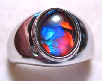 Canadian Ammolite Sterling Silver Ring Mosaic Size 6 By