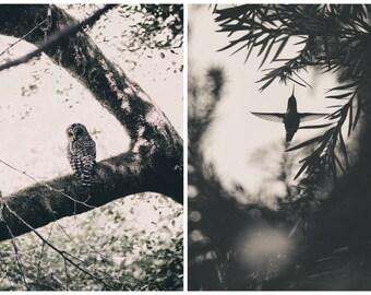 Postcards: Wild Birds