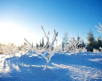 Nature Photography Print, Landscape Photo, Nature Wall Art, Snow Photograph, Blues, Winter Photograph, Outdoor Picture