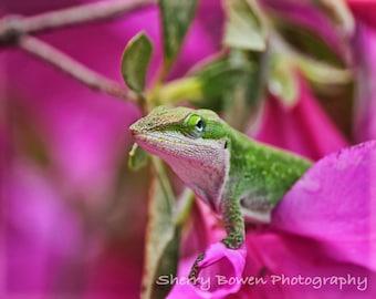Azalea Lizard Fine Art Photography, Fine Art Photography, Fine Art, Nature Photography, Home Decor, lizard, pink, flower, azalea, Humor