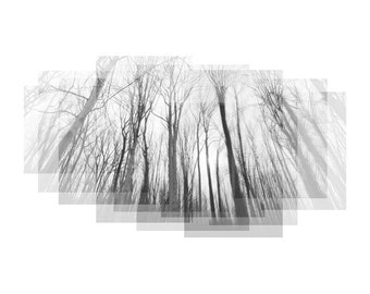 Roots & Branches No. 3 - tree photograph, nature art, tree branches, nature photography, forest photograph, black and white, tree silhouette