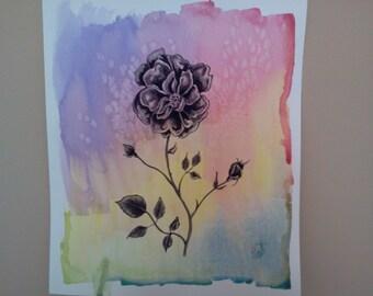 rose on color wash