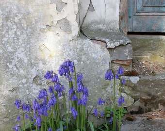 Purple flowers against a weathered grey wall.