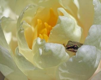 Frog Blossom