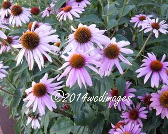 Digital Art Photography Bed of  Flowers Fine Art Home Decor  Nature