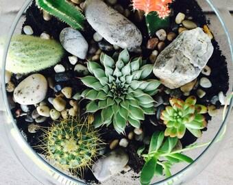 Whimsical Cactus/Succulent Terrarium
