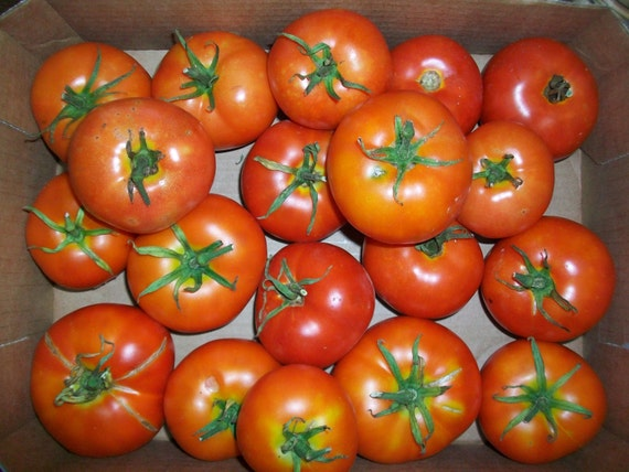 Early Mountain Princess Heirloom Tomato Seeds